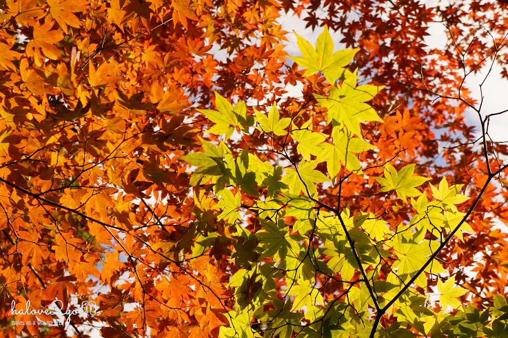 lang-dang-thu-vang-xu-phu-tang-leaves-changing-color.png
