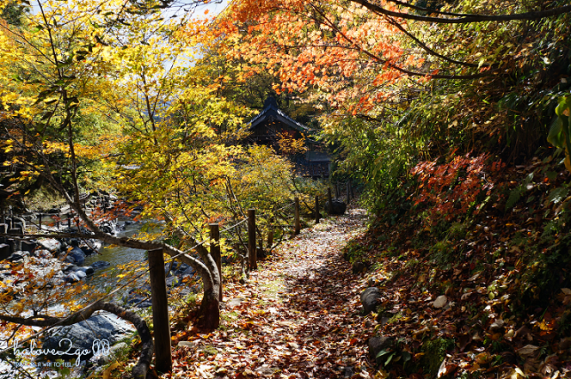 lang-dang-thu-vang-xu-phu-tang-takaragawa-trail-2