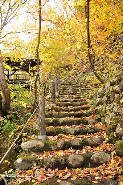 lang-dang-thu-vang-xu-phu-tang-takaragawa-trail-4