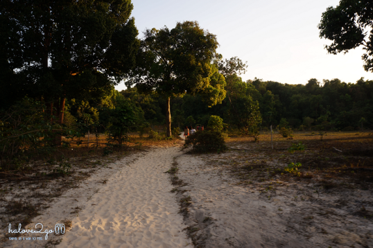 den-kor-rong-samloem-ngam-binh-minh-forest