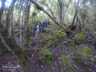 dam-minh-voi-thien-nhien-o-thung-lung-pati-day-2-trail-3