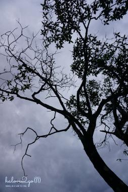 dam-minh-voi-thien-nhien-o-thung-lung-pati-day-2-tree-2