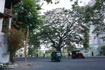 Colombo green street