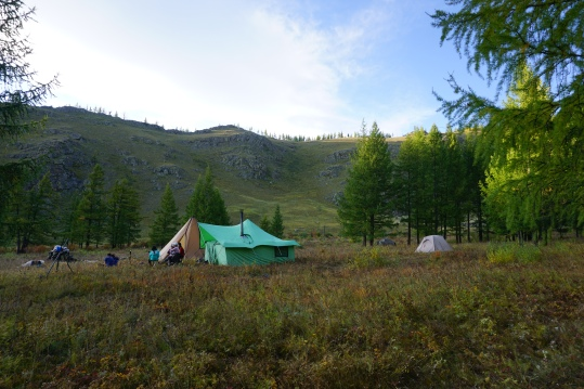 Mong-co-thu-vang-long-lay-tren-lung-ngua-campsite