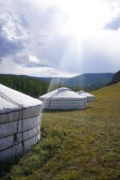 Mong-co-thu-vang-long-lay-tren-lung-ngua-yurt-2