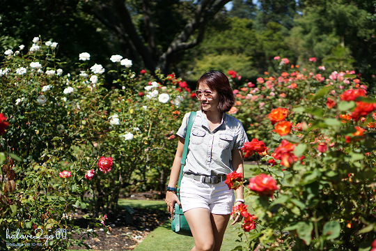 Walking in the roses