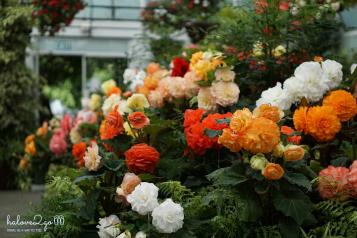 Rose at Botanic garden