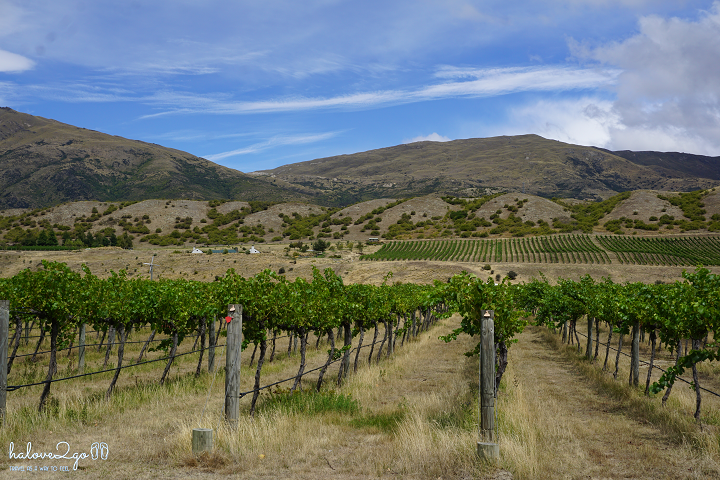 new-zealand-chuyen-road-trip-dau-tien-cua-toi-winery