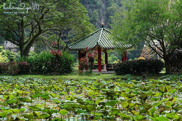 ipoh-pho-duyen-it-nguoi-biet-lotus-pond