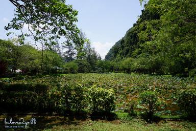 ipoh-thanh-pho-xinh-dep-it-duoc-biet-den-cua-malaysia-lotus-pond-3