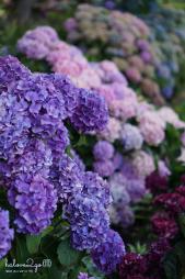 christchurch-thanh-pho-mau-xanh-botanical-garden-flower-1