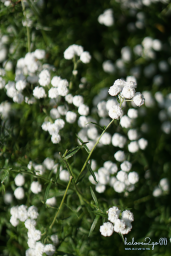 christchurch-thanh-pho-mau-xanh-botanical-garden-flower-2