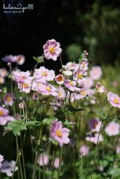 christchurch-thanh-pho-mau-xanh-botanical-garden-flower-3