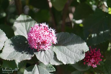 christchurch-thanh-pho-mau-xanh-botanical-garden-flower-5