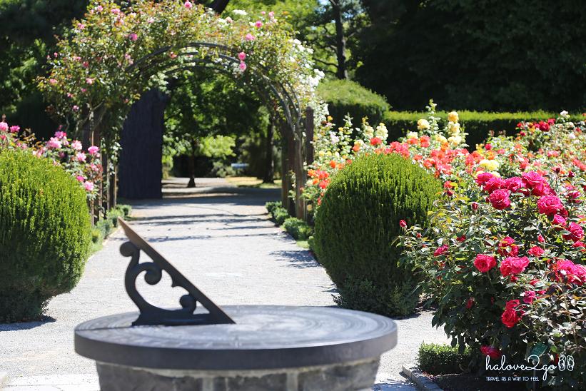 Christchurch-thanh-pho-mau-blue-botanical-garden-rose.png