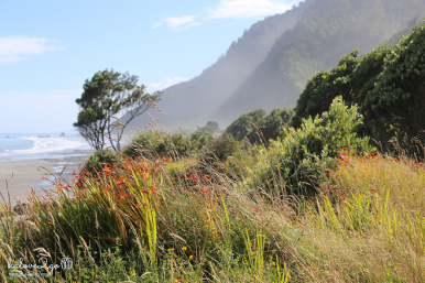 ngao-du-bo-tay-new-zealand-coastline-4
