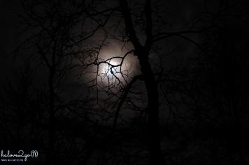 The haunting moon