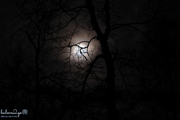 The haunting moon