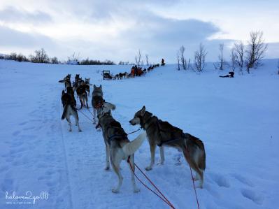 kiruna-abisko-tieu-khien-cung-tuyet-trang-dogsledding-4