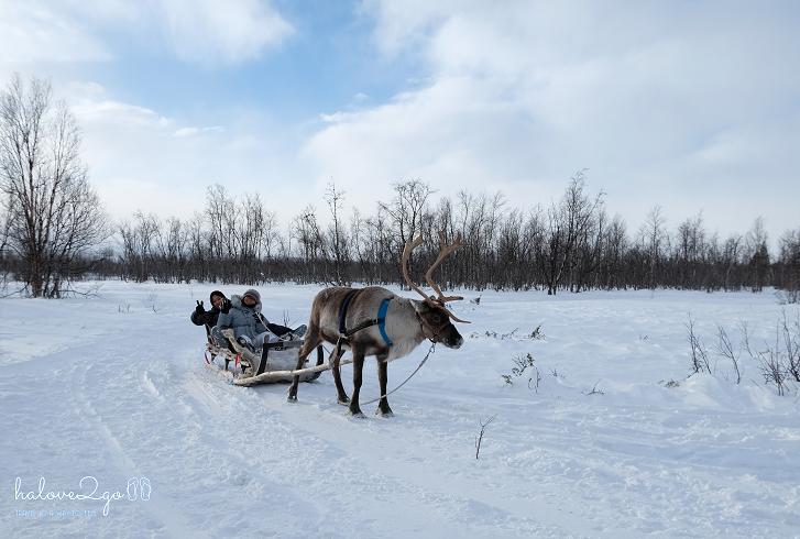kiruna-abisko-tieu-khien-cung-tuyet-trang-reindeer
