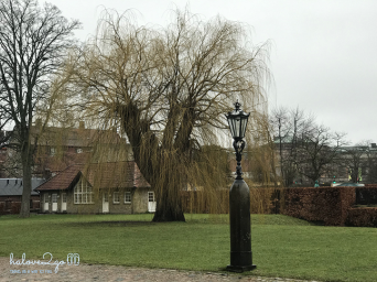 thang-tram-cam-xuc-voi-copenhagen-trees-5