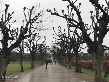 thang-tram-cam-xuc-voi-copenhagen-trees-7