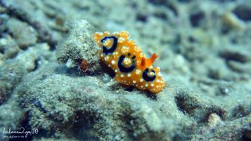 lan-bien-o-hon-mun-nha-trang-seaworm