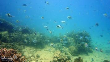 lan-bien-o-hon-mun-nha-trang-small-fishes-2