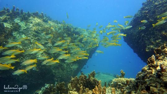 lan-bien-o-hon-mun-nha-trang-small-fishes-3