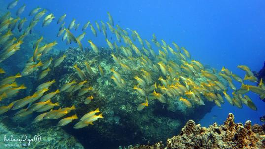 lan-bien-o-hon-mun-nha-trang-small-fishes-4