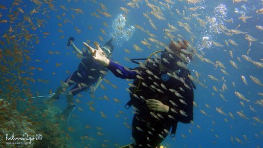 lan-bien-o-hon-mun-nha-trang-small-fishes