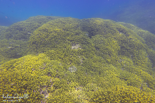yellow coral in Mun island
