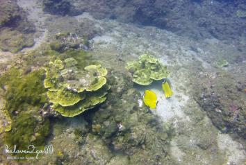 hoang-so-mot-thoang-cu-lao-cham-coral-3