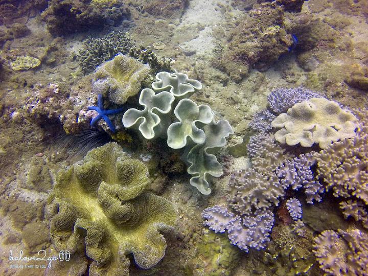 hoang-so-mot-thoang-cu-lao-cham-coral