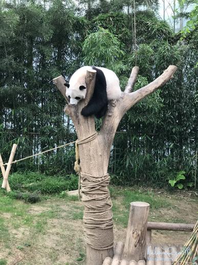 bi-kip-cho-mot-ngay-tron-ven-tai-everland-seoul-panda-world-2