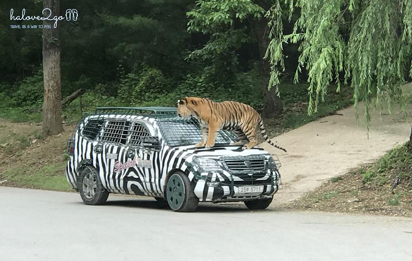 bi-kip-cho-mot-ngay-tron-ven-tai-everland-seoul-safari-world-2