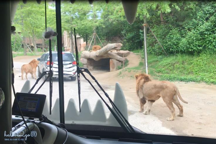 bi-kip-cho-mot-ngay-tron-ven-tai-everland-seoul-safari-world-3