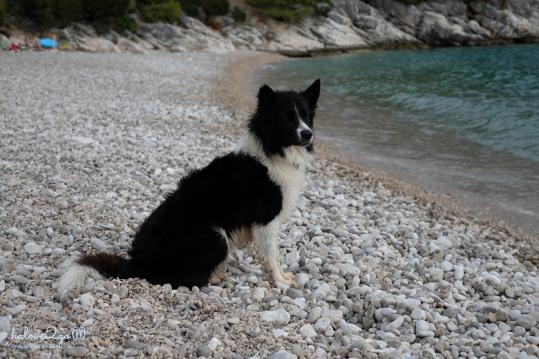 Chú chó thân thiện tại bãi biển Dubovica