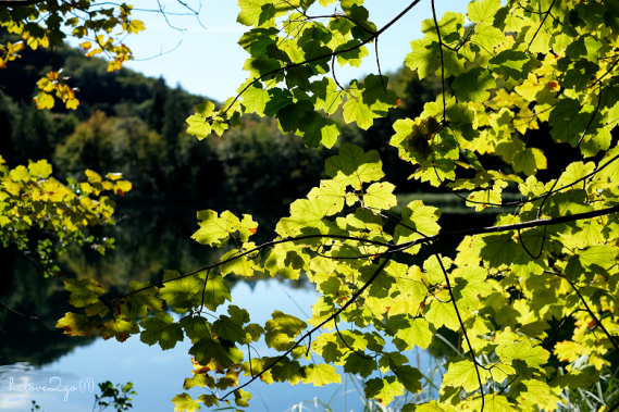 plitvice-bieng-biec-mien-lam-xanh-leaves-3